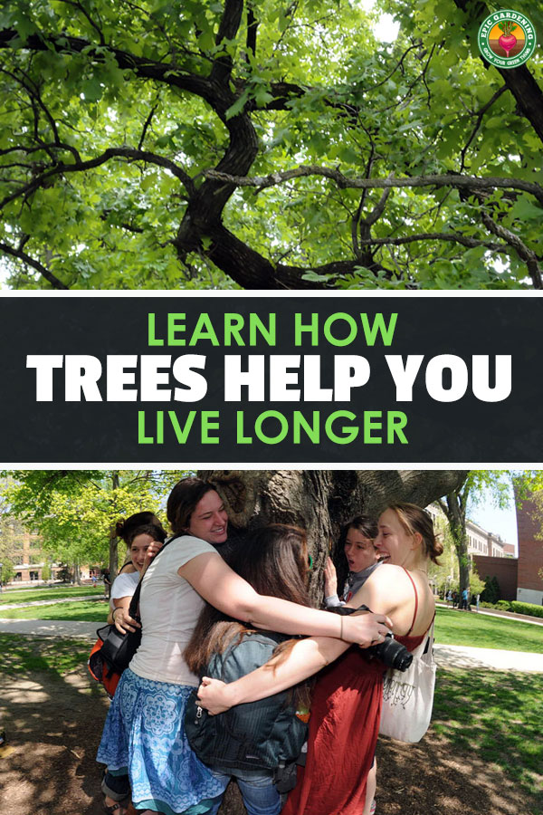 Just being around trees will improve your health. Find out how, and learn what you can do to keep these tall and faithful friends with us forever!