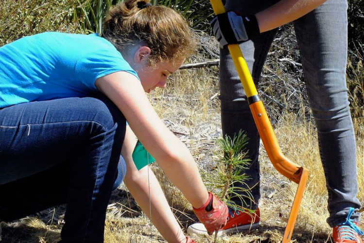 Planting a seedling tree in the woods