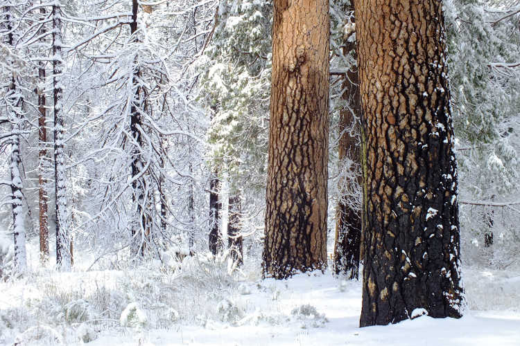 Winter in the Angeles National Forest