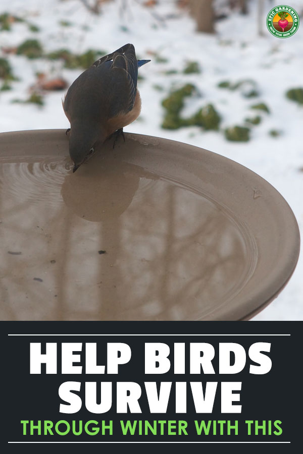Live in an area which gets snow? A heated bird bath can encourage wildlife to stick around all winter. Our buyer\'s guide lists some of the best models!