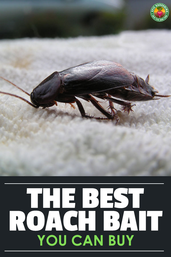 Nobody wants roaches in their home. Find the best roach killer with our complete buyer\'s guide, and learn about the methods you can use to wipe them out!