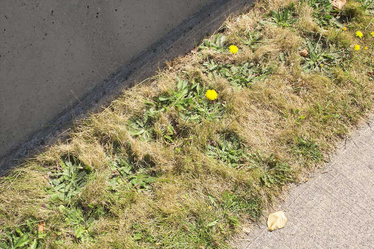 Weeds in grass