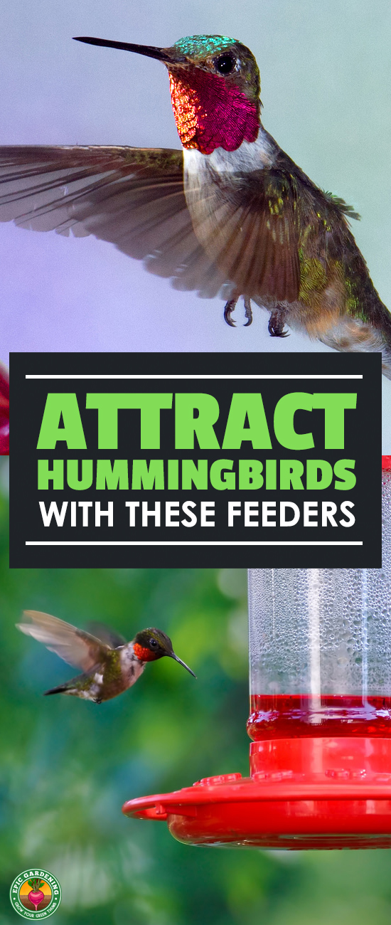 Do you love seeing the blur of hummingbird wings? Getting the best hummingbird feeder for your garden will draw them right in for a visit! Check out our in-depth buyer's guide.