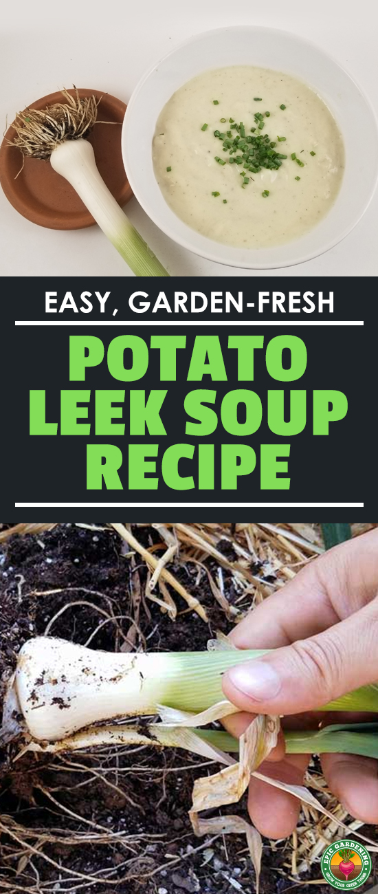 The leek and potato soup recipe comes straight from the garden and couldn't be easier to make! Plus, you can modify it to your own personal tastes. Try it out! #recipes #soups #potatoleeksoup