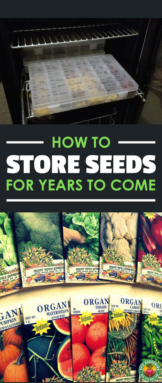 Learn the best ways of storing seeds for the future with our in-depth how-to guide. We cover everything from containers to cold storage!