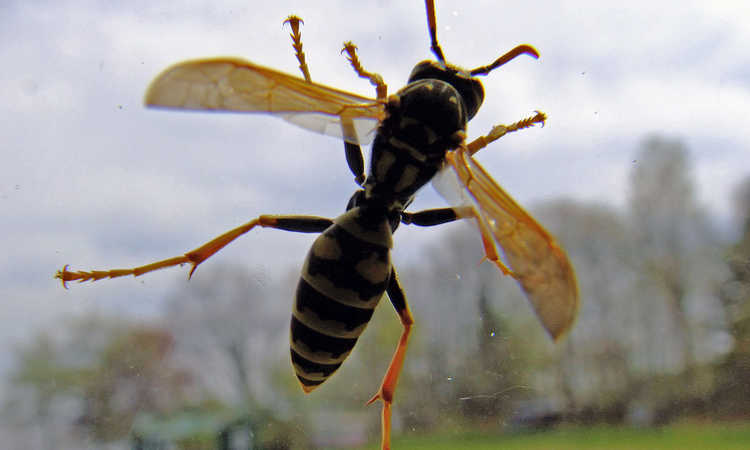 Best Wasp Trap: Wiping Your Wasp Woes Away