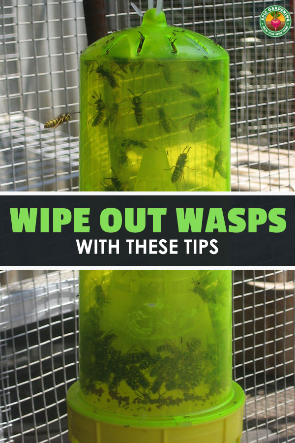Are you having a war with wasps? If you\'ve got wasp problems, I\'ll show you how to pick the best wasp trap for your specific situation!