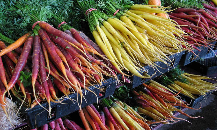 Growing Carrots: Grow A Rainbow Of Tasty Vegetables In Your Yard