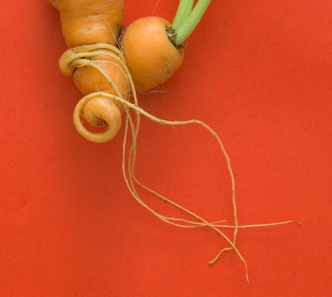 twined carrots