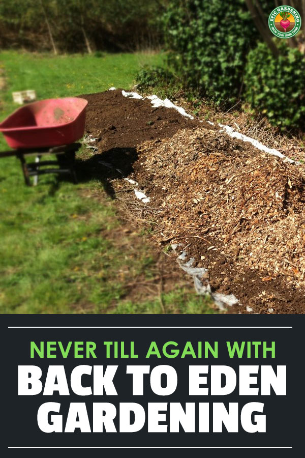 Never till your garden again using the Back to Eden gardening method. This sheet mulching technique can greatly improve your soil!