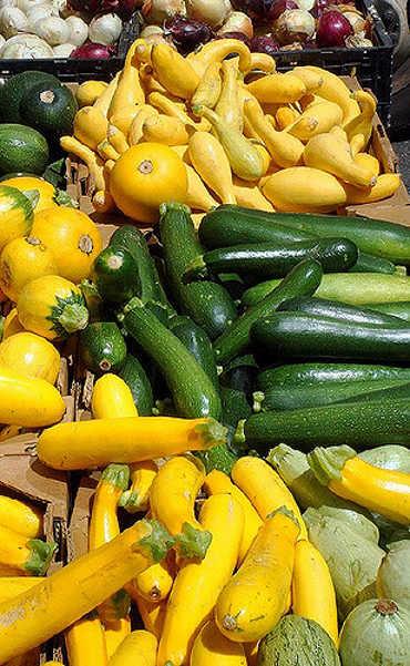 Summer squash bounty