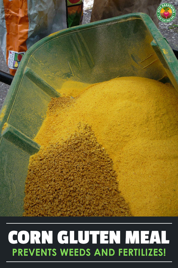 Looking for a quality lawn fertilizer? How about a pre-emergent herbicide? Corn gluten meal is both! Explore this natural choice with us.