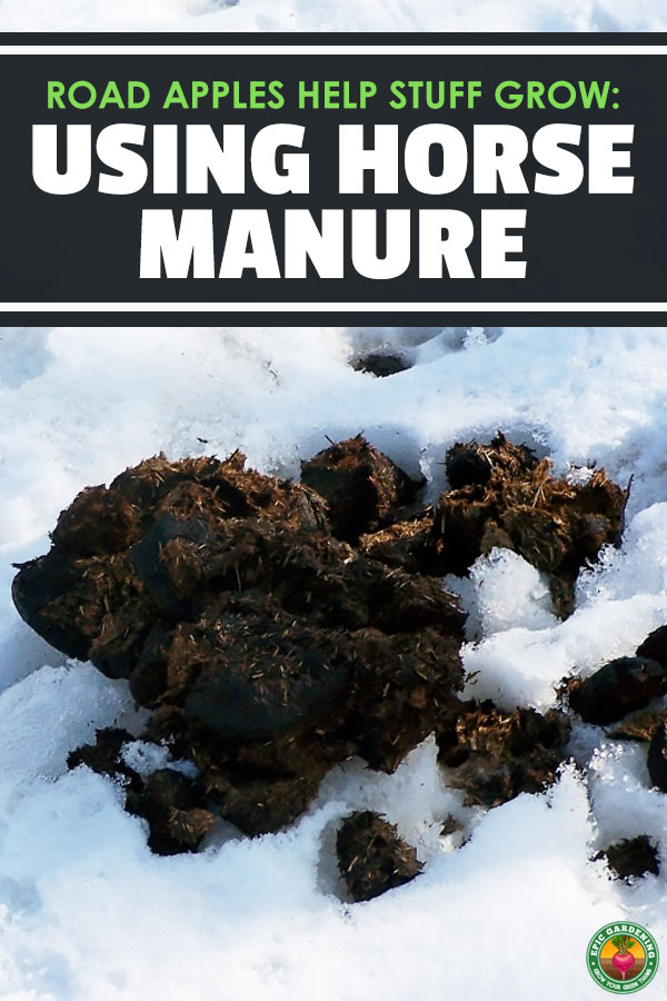 Looking for a fantastic fertilizer? Horse manure is a great choice! We'll tell you how to compost it and more in our how-to guide.