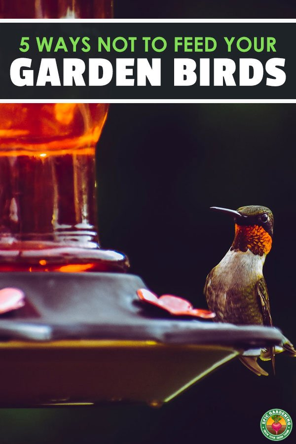 Most people love watching wild garden birds in their natural habitat and have developed an interest in helping sustain the wildlife in their gardens. However, feeding garden birds the wrong foods may actually be doing them more harm than good.