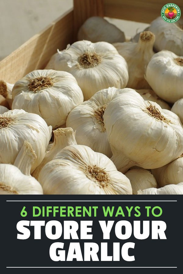After growing or buying a fresh batch, it\'s important to store garlic properly. Storing garlic incorrectly can be dangerous!
