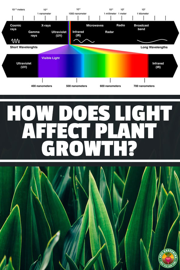 How Does Light Affect Plant Growth? | Epic Gardening