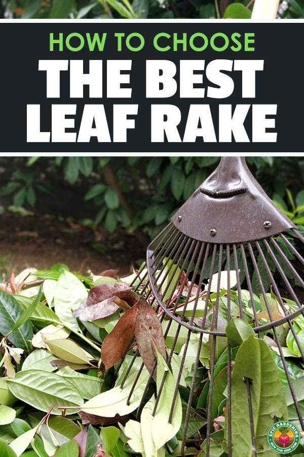 Raking leaves is a chore that doesn\'t have to be terrible, so long as you have the best leaf or garden rake. See my top rake reviews here.