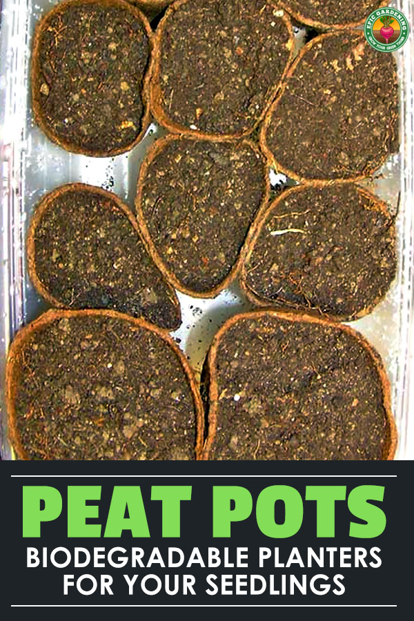 Are you getting ready to start seeds or doing transplants? Peat pots should be on your list! Here\'s everything you need to know about this eco-friendly option!