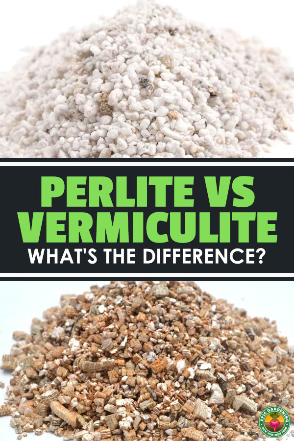 The difference between vermiculite vs. perlite can be a little confusing and has caused debate amongst gardeners. Find out which to use in your garden.