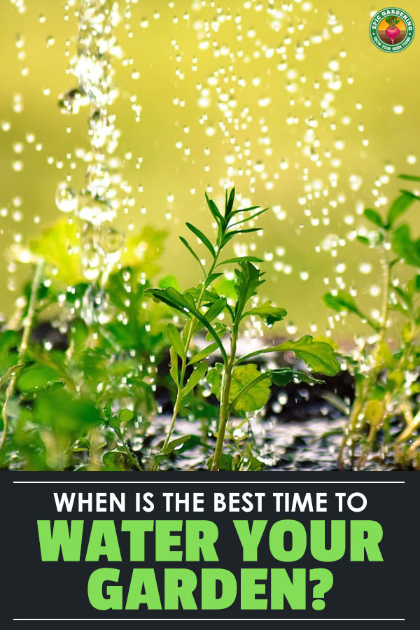 Knowing the best time to water a vegetable garden is critical to getting the best results. It\'s easy once you understand a few simple gardening concepts...