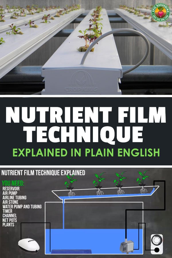 The Nutrient Film Technique Explained | Epic Gardening