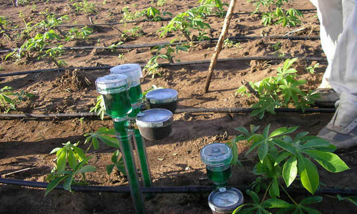 10 Best Soil Moisture Meters For Perfect Watering | Epic Gardening
