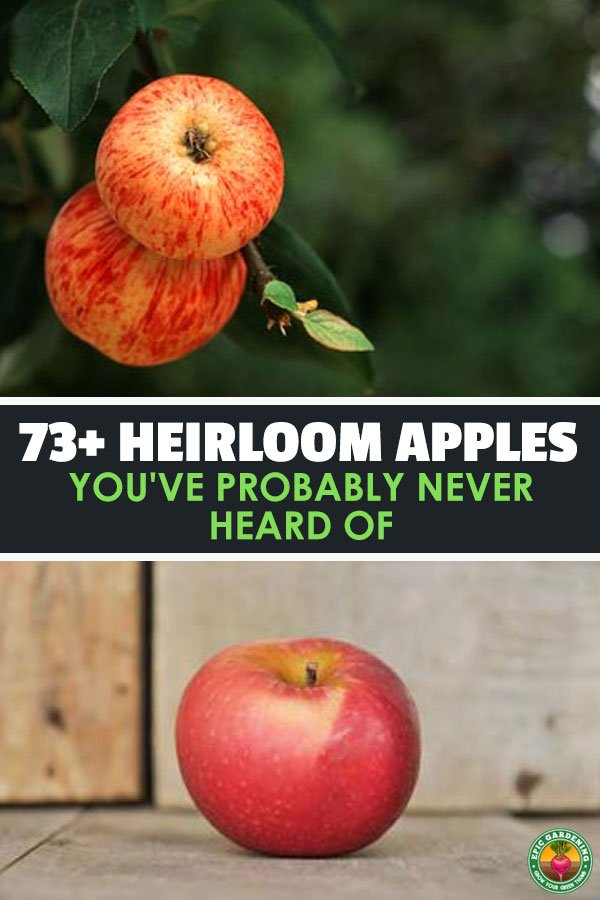 Forget about Granny Smith...there are dozens of heirloom apple varieties that you\'ve probably never heard of! Check out the list and grow some of your own.