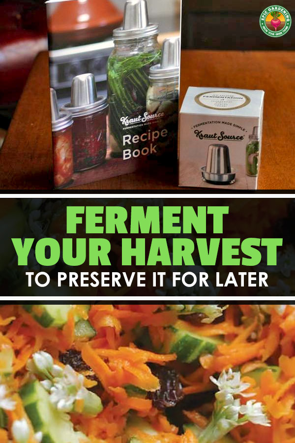 Want to preserve your harvest? Lacto fermenting vegetables is easy if you have the right tools. We\'re discussing equipment and recipes today!