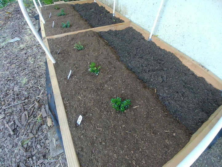 Mulched plants ready to thrive