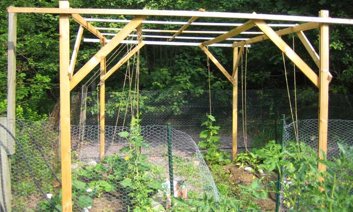 A larger-scale and more robust cucumber trellis, training cukes upwards with ease
