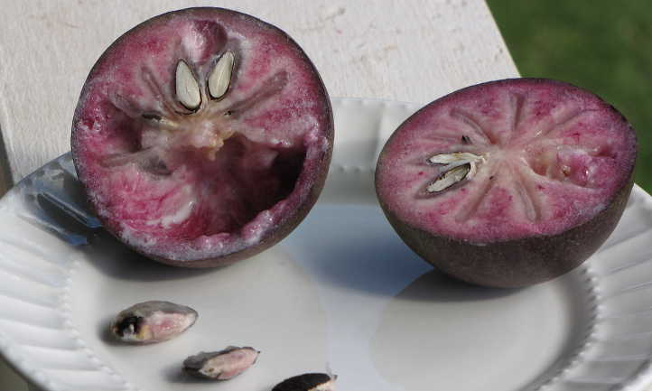 Cut star apple showing interior