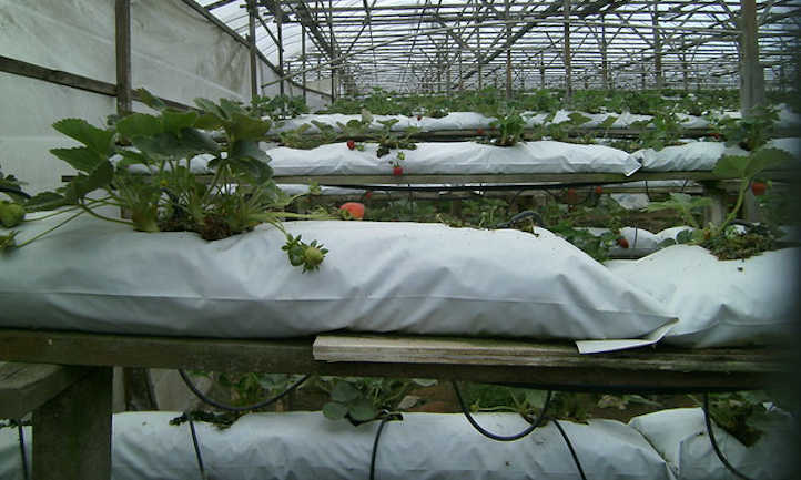 Hydro grow bag system using coir or peat