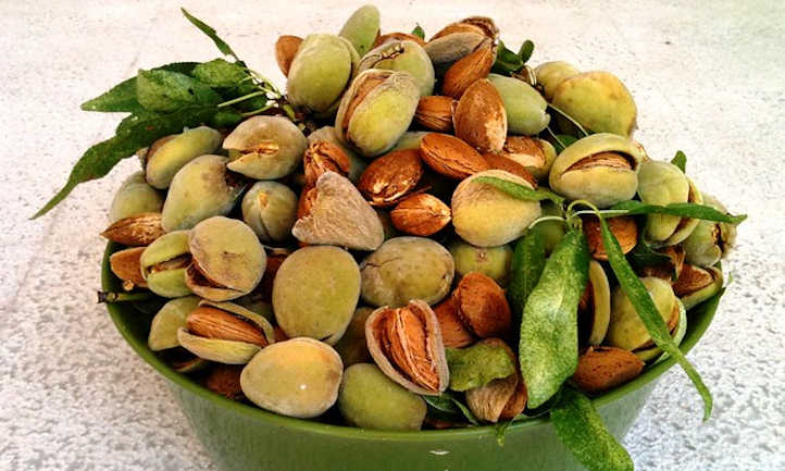 Ripe almond fruit