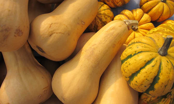 Butternut and carnival squash