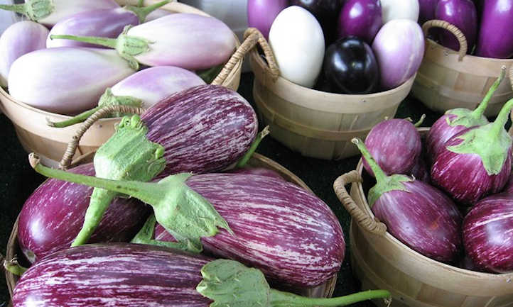 A variety of eggplant