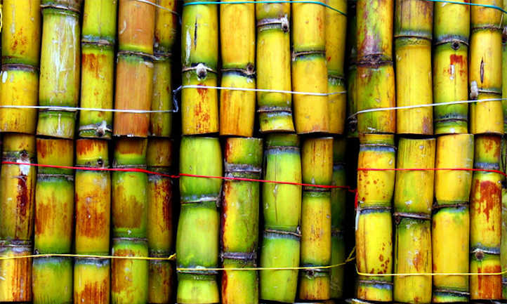 How To Grow Sugar Cane