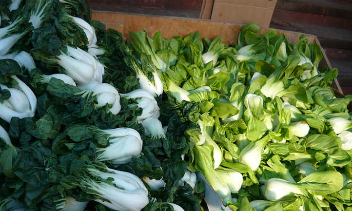 Gerard and Broadview bok choy