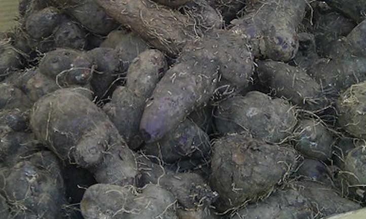 Dioscorea alata roots