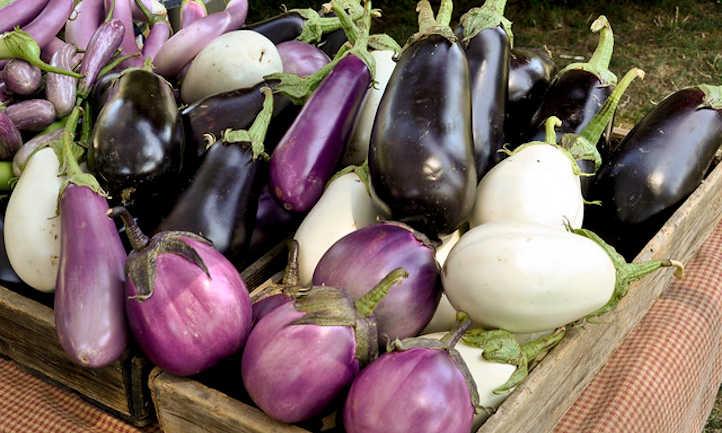 Eggplant companion plants