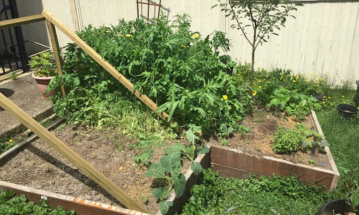 Sloped raised bed trellis for cucumbers
