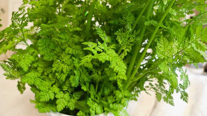Chervil herbs