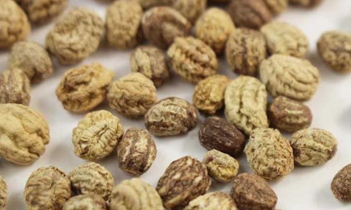 Jewel Mix Nasturtium Microgreens Seeds
